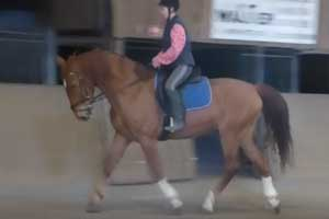 Calimero-Pony